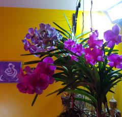 Eclairage pour les Orchidées